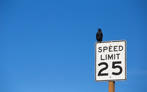 Picture the sky, bird, Speed limit