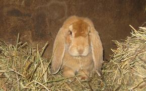 Picture rabbit, macro, Animals