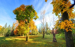 Picture autumn, the sky, grass, trees, Park