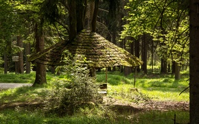 Wallpaper Germany, trees, Waldershof, index, track, path, Bayern, canopy, forest