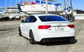Picture Audi, white, wheels, rear