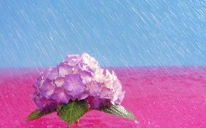 Picture flowers, bright, Rain