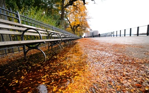 Picture leaves, new York, New York, nyc