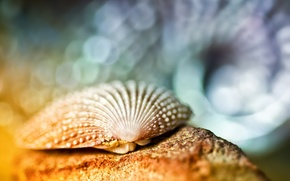 Picture macro, glare, shell, bokeh