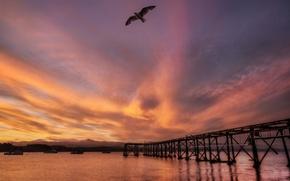 Picture sea, sunset, bridge, bird, Seagull, New Zealand, New Zealand, harbour
