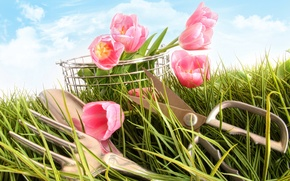 Picture photo, Flowers, Grass, Tulips, Scissors, Pink, Plug