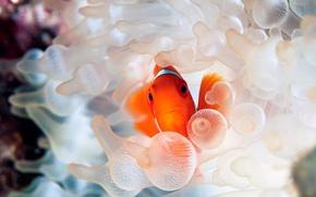 Picture sea, fish, beautiful