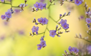 Picture macro, lilac, buds