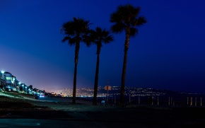 Picture sea, the sky, night, the city, lights, palm trees