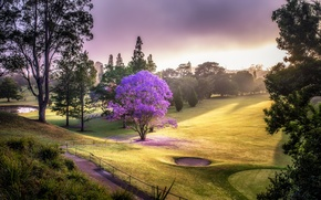 Picture trees, landscape, nature, Park, Field, Golf