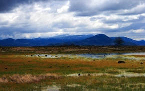 Picture grass, mountains, swamp