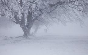 Picture winter, snow, Blizzard