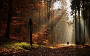 Picture autumn, leaves, the sun, trees, people, Forest