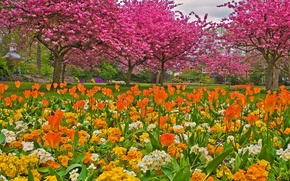 Picture grass, trees, flowers, Park, garden, tulips