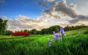 Picture flowers, bridge, meadow, irises