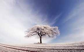 Picture frost, field, the sky, clouds, tree