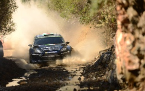 Picture trees, squirt, track, ford, Ford, wrc, Fiesta, fiesta, m-sport, elfyn evans