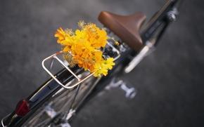 Picture flowers, bike, bouquet, bike, flowers, bouquet