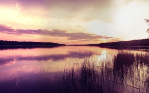 Picture forest, water, landscape, sunset, nature, reflection, river, the reeds, shore, horizon
