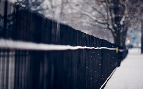 Picture winter, macro, snow, trees, snowflakes, nature, the fence, fence, rods, iron