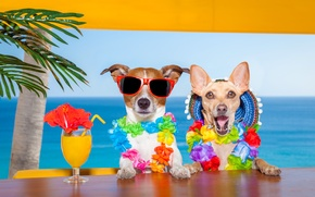 Picture sea, dogs, summer, juice, Chihuahua, Jack Russell Terrier