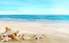 Wallpaper sand, sea, beach, shell, beach, sand, seashells