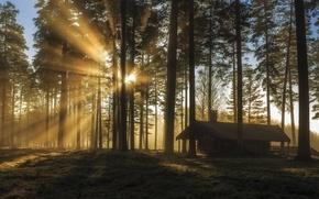 Picture forest, Sweden, Sweden, reserve, Varmland, Charlotte mountain, Tallmon