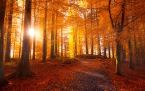 Picture the sun, light, road, trees, autumn, forest, leaves
