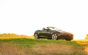 Wallpaper light, grass, Jaguar, V8 S, car, green, Convertible, auto, light, grass, F-type