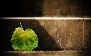 Picture light, Sheet, leaf, step