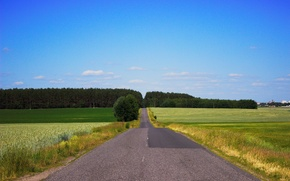 Picture road, summer, field