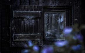 Picture face, window, horror, Creek, The devil inside