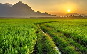 Picture road, field, the sun, mountains