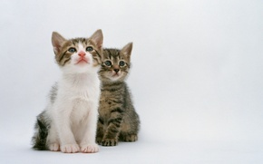 Picture cat, cat, kitty, two, cat