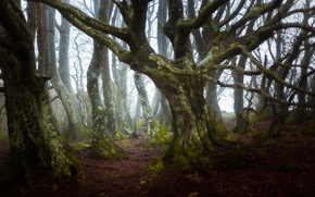 Picture forest, trees, nature, branch, France, moss