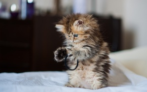 Picture kitty, Daisy, © Benjamin Torode