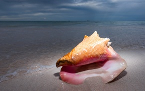 Picture sand, the ocean, shell