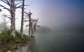 Picture trees, nature, river, shore, morning, trunks. fog