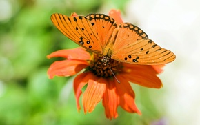 Picture flower, nature, Wallpaper, butterfly, wings, petals