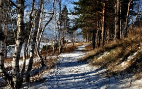 Wallpaper winter, forest, snow, track, path, Ust ' -Kut