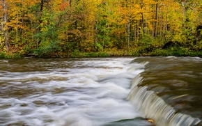 Picture autumn, forest, trees, river, stream, thresholds