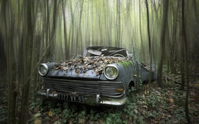 Picture machine, forest, scrap
