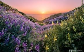 Wallpaper flowers, sea, photographer, Kenji Yamamura, beautiful, hills, the sun, sunset