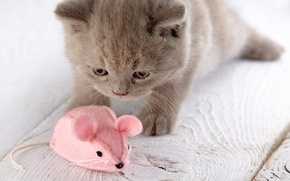 Picture toy, mouse, mouse, kitty