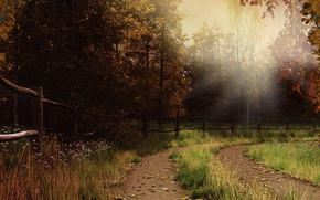Picture autumn, forest, grass, leaves, rays, trail, fence, haze
