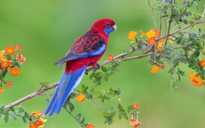 Picture flowers, bird, branch, parrot, wildlife