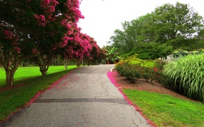 Picture road, trees, flowers, Park, spring, Nature, flowering, road, trees, park, flowers, spring, flowering