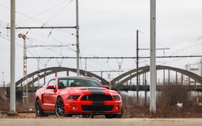 Picture Mustang, Ford, Shelby, GT500, 2012, Race Red