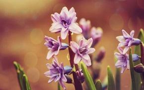 Picture purple, flowers, green, green, flowers, purple