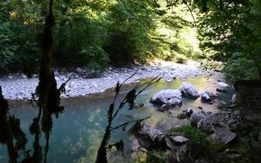 Picture Nature, Summer, Sochi, Tree grove